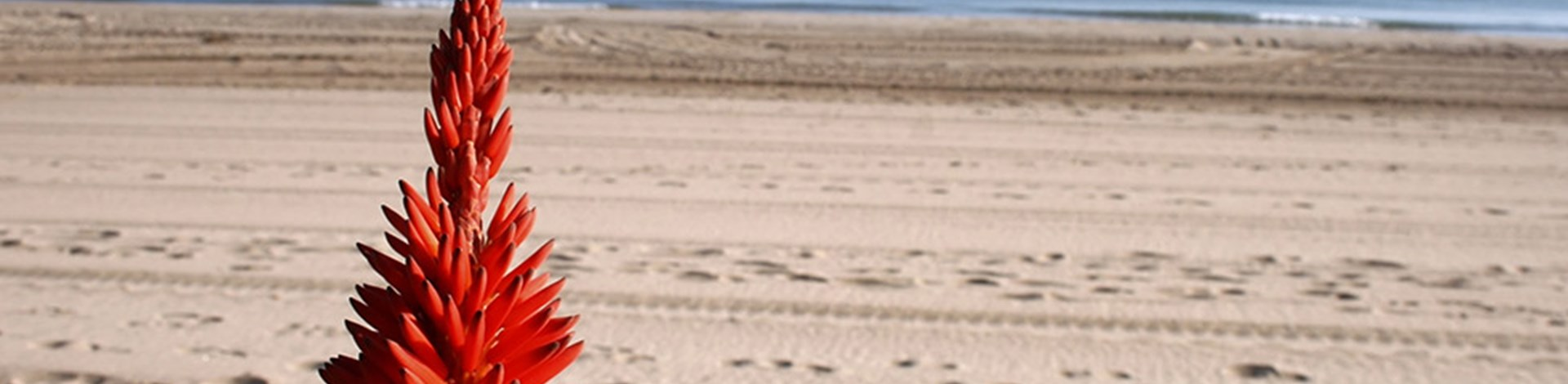 Playa de Gollerón